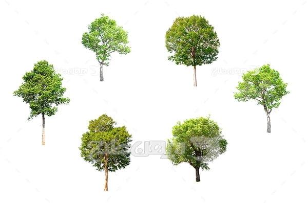 تصویر درخت