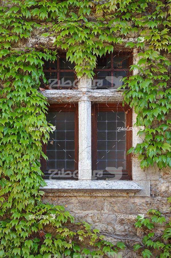 عکس پنجره ساختمان و گیاهان