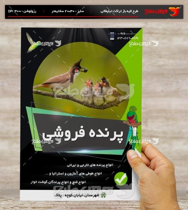 طرح لایه باز تراکت و پوستر تبلیغاتی پرنده فروشی