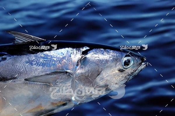عکس ماهی،گوشت ماهی, ماهی و دریا