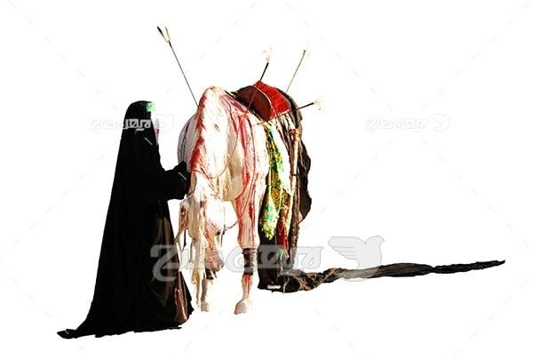 عکس اسب زخمی امام در تعزیه
