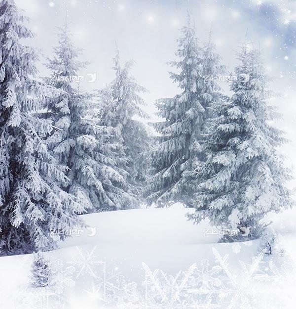 تصویر منظره برفی و برف و درخت کاج