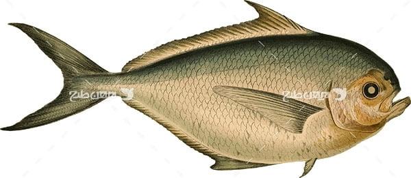 عکس پی ان جی ماهی