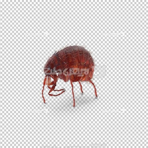 تصویر دور بری حشرات
