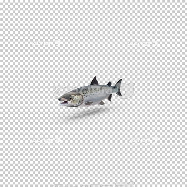 تصویر دوربری سه بعدی ماهی