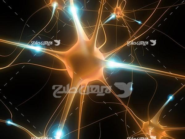 عکس سلول های عصبی