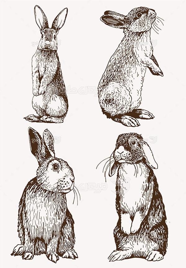 وکتور خرگوش