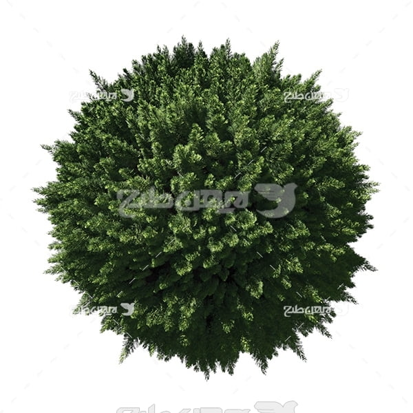 عکس درختان روی کره زمین