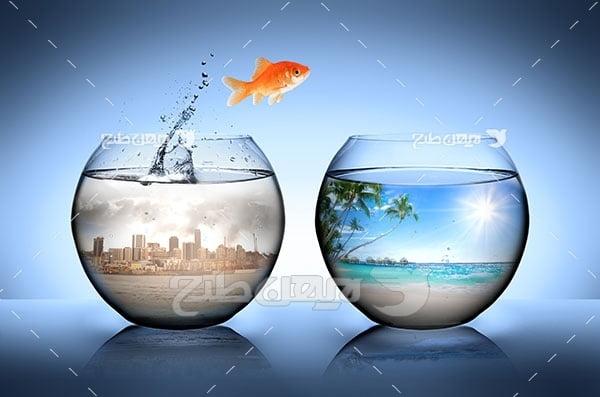 تصویر مسافرت و گردشگری و ماهی قرمز و تنگ