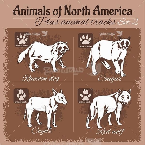 وکتور حیوانات امریکا شمالی