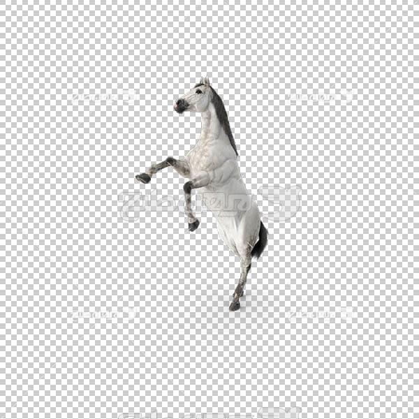تصویر سه بعدی دوربری اسب
