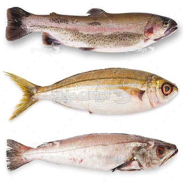 ماهی،گوشت ماهی