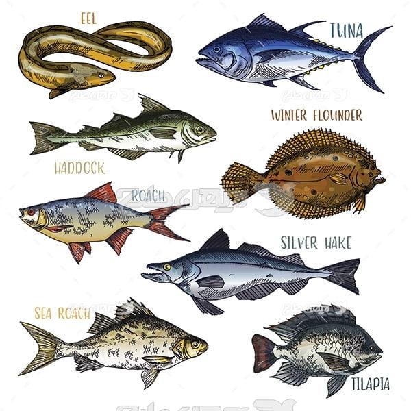 وکتور گرافیکی ماهی