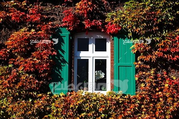 عکس پنجره خانه در بین گل ها