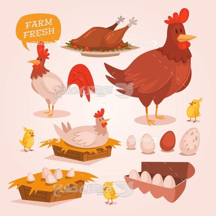 وکتور مرغ ، خروس و تخم مرغ و جوجه