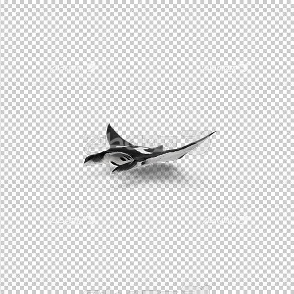 تصویر دوربری پی ان جی سفره ماهی
