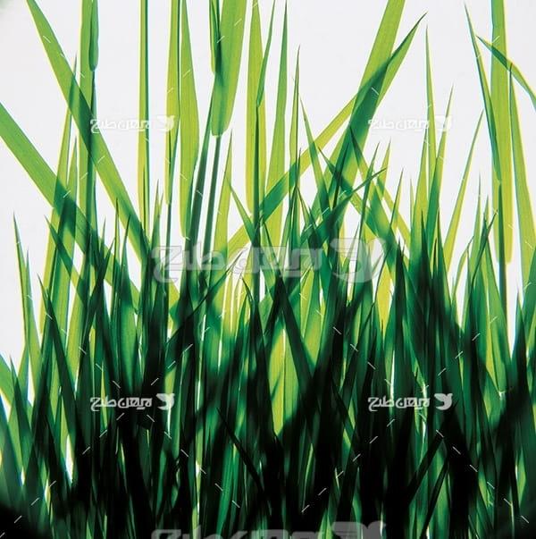 عکس گیاهان