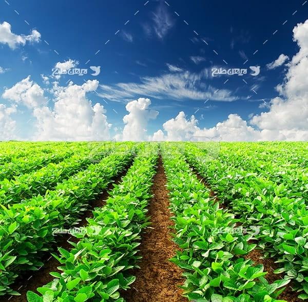 عکس منظره و گیاه و چای