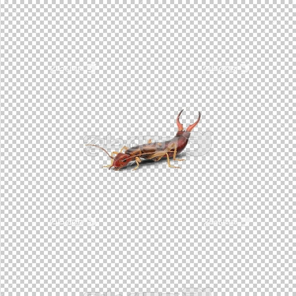 تصویر دور بری پی ان جی حشرات