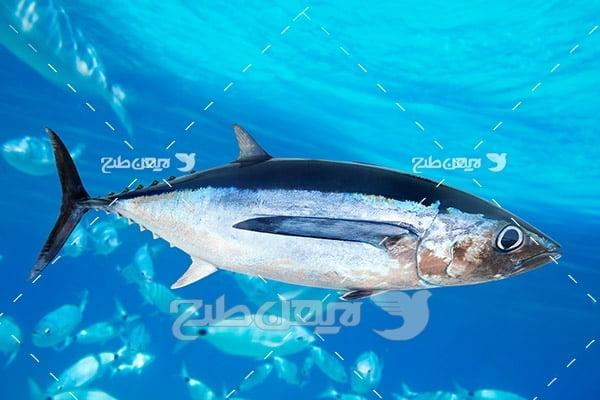 ماهی،گوشت ماهی,ماهی و دریا