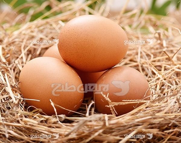 تصویر تخم مرغ محلی قهوه ای