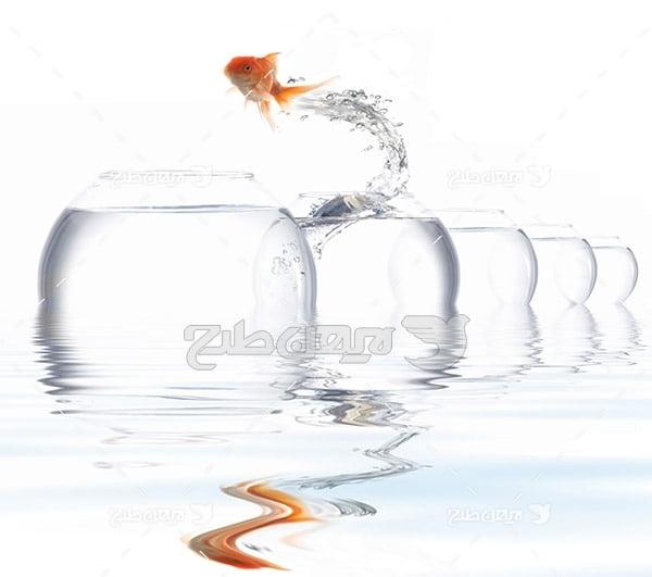 ماهی ,ماهی گلی