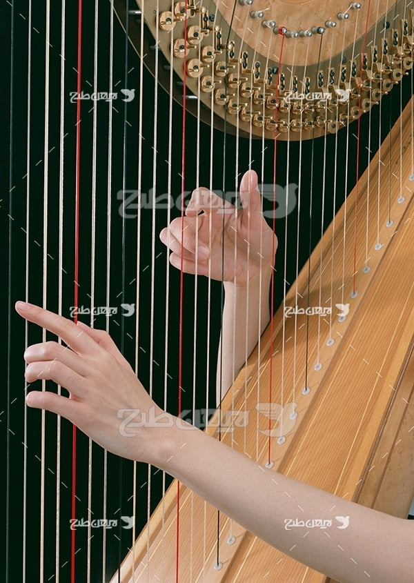 تصویر موسیقی ساز تاردار
