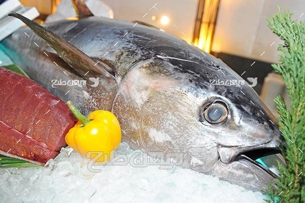 ماهی،گوشت ماهی و گوشت قرمز,غذای ماهی,ماهی دلمه گوشت قرمز,ماهی کبابی