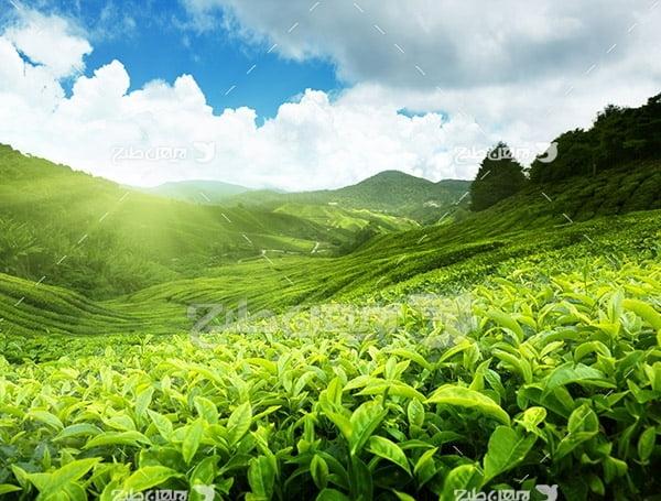 عکس کشاورزی