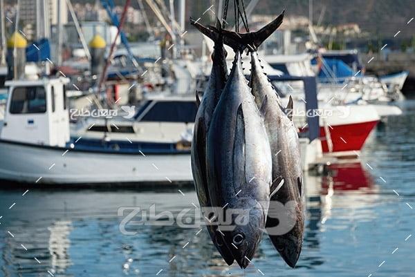 ماهی،گوشت ماهی,صید ماهی