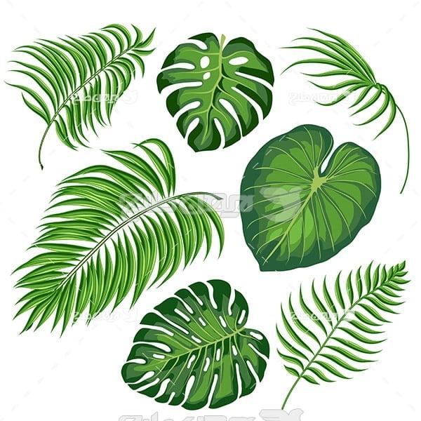 وکتور انواع برگ درخت