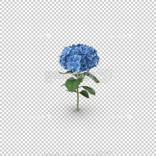 تصویر سه بعدی دوربری گل آبی