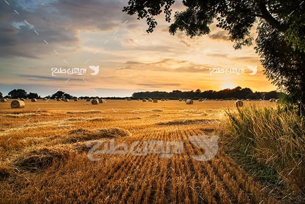 عکس کشاورزی و غروب
