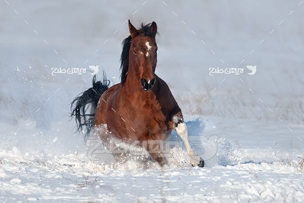 تصویر اسب