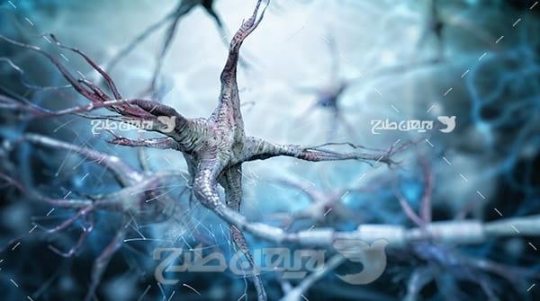سلول هایه عصبی