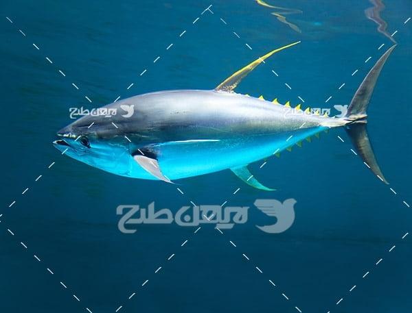 ماهی،گوشت ماهی,ماهی ودریا,صید ماهی