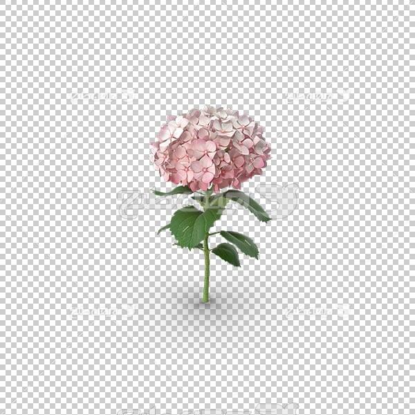 تصویر سه بعدی دوربری شاخه گل