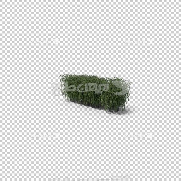 تصویر سه بعدی دوربری درخت