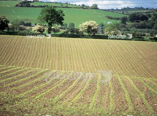 عکس مزرعه کشاورزی