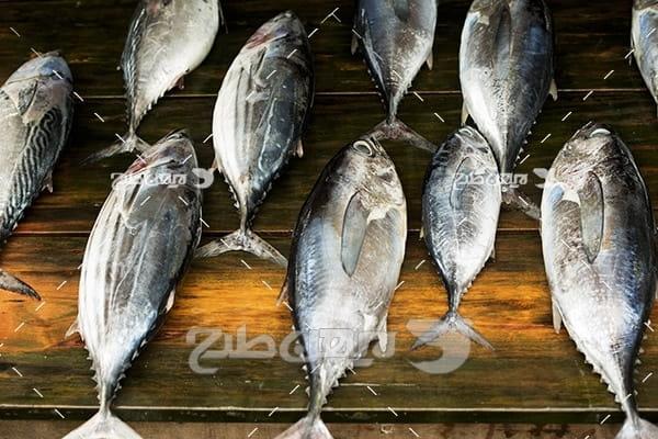 ماهی،گوشت ماهی,صید ماهی,ماهی دریا,غذای ماهی