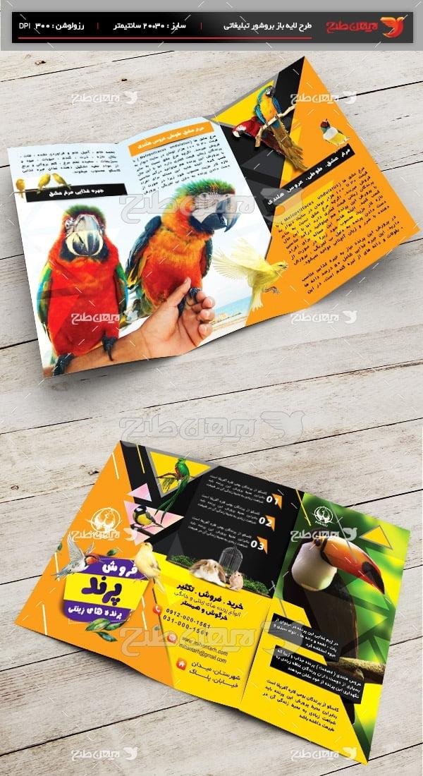 طرح لایه باز بروشور پرنده فروشی