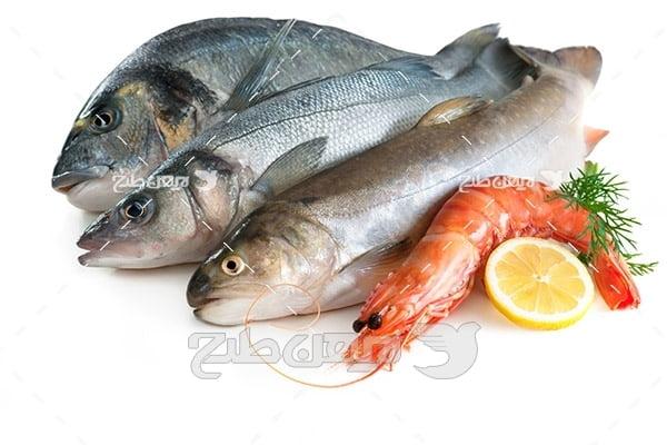 عکس ماهی و میگو