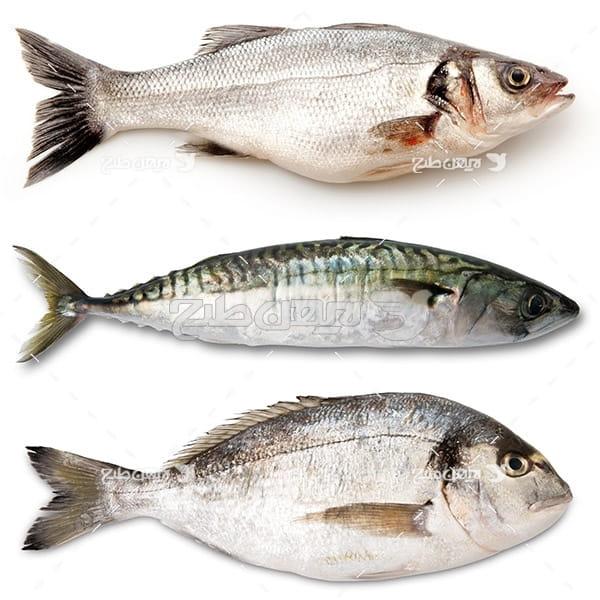 عکس ماهی خام