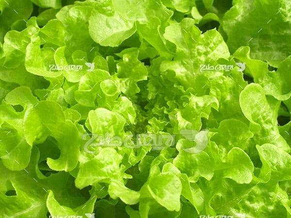 برگ سبز گیاهان
