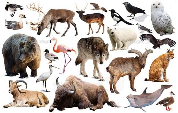 عکس حیوانات