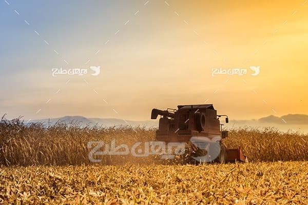 مزرعه برداشت گندم و کشاورزی
