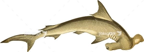 عکس پی ان جی کوسه ماهی