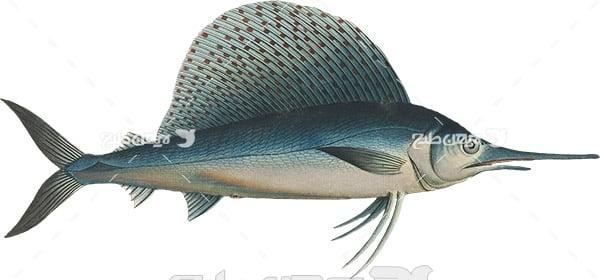 عکس پی ان جی نیزه ماهی