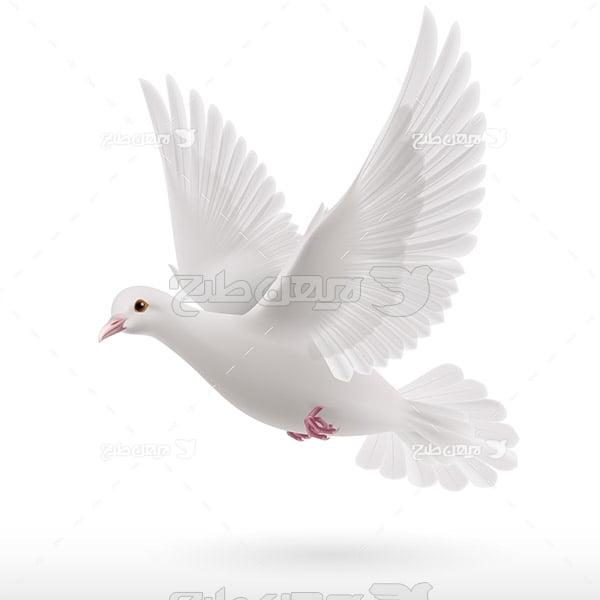 طرح وکتور کبوتر