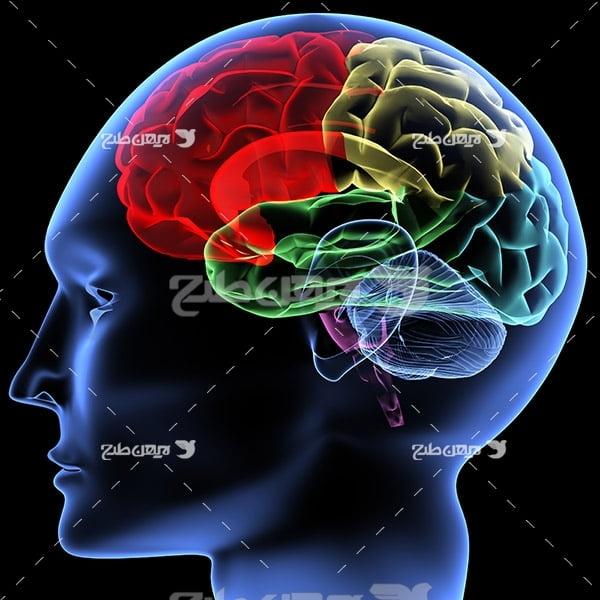 عکس مغز